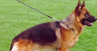 محو اسم مواطن من السجلات الجنائية بعد براءته من اشتباه كلب البوليسى به