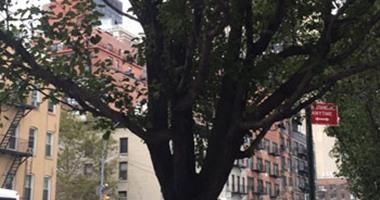 أشجار نادرة أمام مقر الأمم المتحدة فى نيويورك تخلد مذبحة الأتراك ضد الأرمن