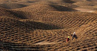 الزراعة: مصر حريصة على تنمية الطاقة المتجددة.. والتصحر أهم التحديات