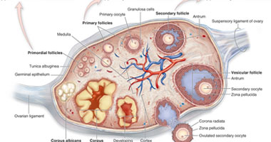 هل جراحة المناظير مفيدة لعلاج تكيسات المبيض؟