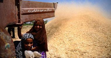الحكومة تعلن أسعار استلام محصول القمح بأعلى من السعر العالمى