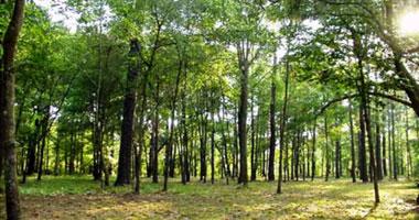 """""""الزراعة"""" تعد  خطة  لإقامة مليون فدان غابات شجرية بالظهير الصحراوى"""