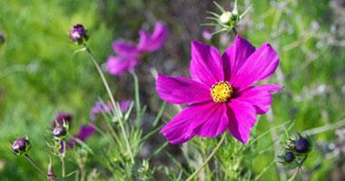 أزهار / صورة أرشيفية