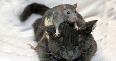 أحمد فوزى يكتب: الشعب يريد إنهاء لعبة القط والفار