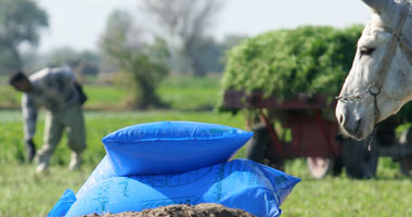 الزراعة: استمرار صرف الأسمدة للمحصول الشتوى وخط ساخن لتلقى شكاوى الفلاحين
