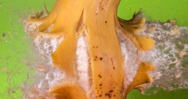 لحظة انفجار الموز