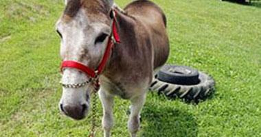 سالم المراغى يكتب : عندما تحول قنوات الفتنة الحمار إلى حصان !