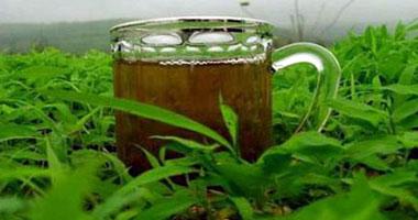 الشاى الاخضر يعالج الكبد الدهنى s102011282917.jpg