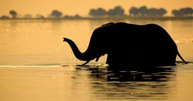 أفضل ما في أفريقيا  Best of Africa S10201129164458