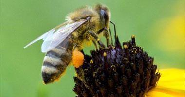 دراسة ألمانية: العسل أنواع وكل نوع له فائدته الصحية للجسم