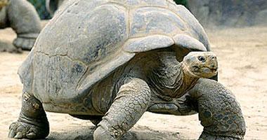 السلاحف