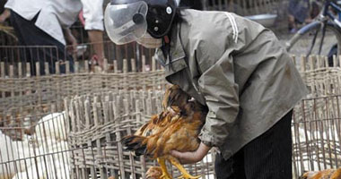 إجراءات جديدة لمواجهة أنفلونزا الطيور بسبب المناخ المتغير × 6 محاور