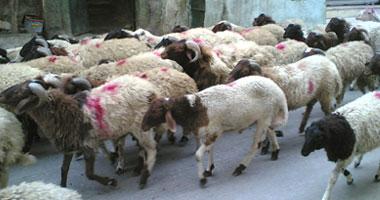 الطب البيطرى: الرقابة على 14 منفذا للعاصمة لمنع تهريب اللحوم الفاسدة