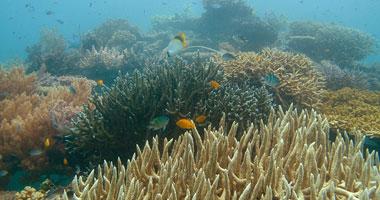 تحقق النيابة فى واقعة التعدى على الشعاب المرجانية بالبحر الأ
