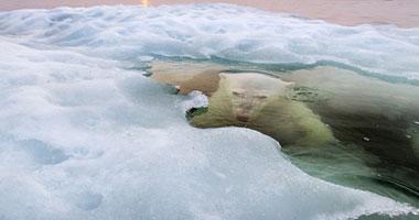 الأعوام من 2015 إلى 2017 الأشد حرارة بسبب ذوبان الجليد القطبى