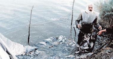 رئيس المركز الدولى للأسماك: غياب التنظيم المؤسسى أثر على الاستزراع