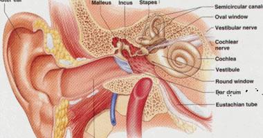 الأذن – صورة أرشيفية