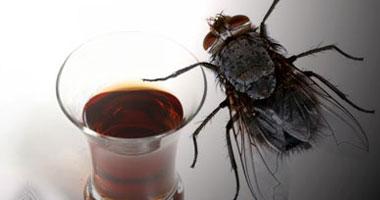 الذباب ينسى مشاكله العاطفية بشرب الكحول