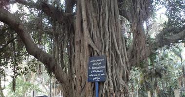 سهم وحرفين وكلمة مش ممكن تموت.. هنا تقع شجرة الحبيبة