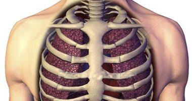 اعرف جسمك عظم القص 3 أجزاء تربط عظام القفص الصدرى ببعضها اليوم السابع