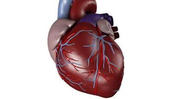 استشارى: الدعامة المعدنية العلاج البديل لأمراض القلب S42012131629