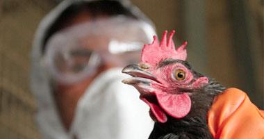 وفاة حالة جديدة بأنفلونزا الطيور.. وظهور أول إصابة فى 2015 S420121414920