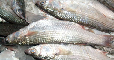أسعار الأسماك اليوم:البلطى بـ18 جنيها والجمبرى 120 والبورى 30 جنيها   S4201214232815