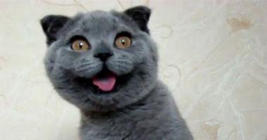القطة كسينيا
