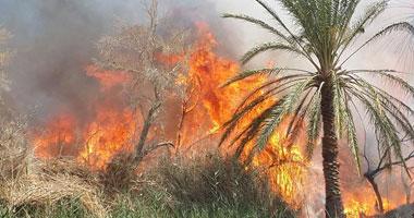 الدفاع المدنى يسيطر على حريق فى مزرعة بمركز الداخلة