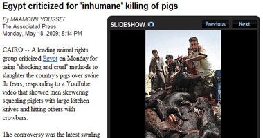 """الأسوشيتيد برس: نقد مصر لذبح الخنازير """"بوحشية"""""""