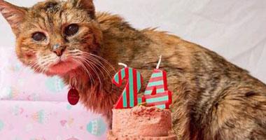 """رحيل """"بوبى"""" أكبر قطة معمرة عن عمر ناهز 24 عامًا S5201422135210"""