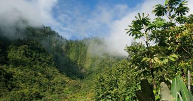 """النشاط البشرى يدمر غابة """"باندو"""" الأمريكية"""