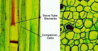 اعرف جسمك.. الأنسجة الضامة تحافظ على شكل الجسد وأجهزته