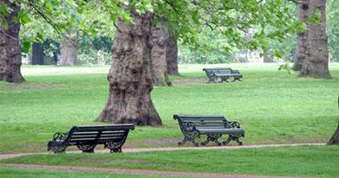 أبحاث طبية: المساحات الخضراء تساعد فى الحفاظ على صحة الإنسان - صفحة 2 S720122023914