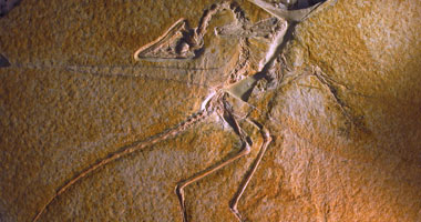 الصين تكتشف آثار أقدام لحفرية ديناصور تعود إلى 100 مليون عام