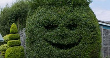 شجرة بوجه ضاحك