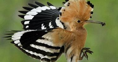 طيور وحيوانات من قصص الأنبياء S9200913142247