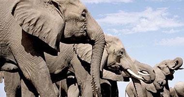 حديقة حيوانات أمريكية تدرب أفيالها غسيل السيارات s920095125910.jpg