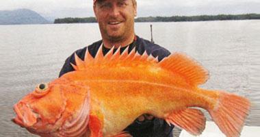 بالصور: صياد بريطانى يجمع 1000سمكة نادرة  S920104214432