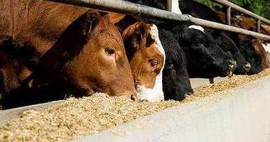 وصول 10 آلاف طن ماشية إلى ميناء الأدبية بالسويس - صورة أرشيفية