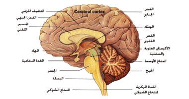 أسباب الكهرباء الزائدة المخ