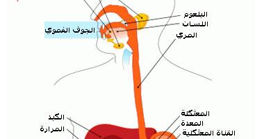 الجديد فى علاج ارتجاع المرىء Smal2201024113920