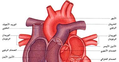 انخفاض نسبة الإصابة بأمراض القلب عند الأشخاص غير المرهقين نفسيا
