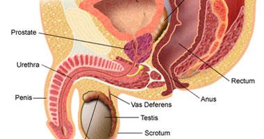 آلام الشرج تحدث بسبب وجود التهاب فى البروستاتا