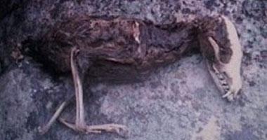 العثور على طـائر برأس ديناصور فى إيــران Smal5201112173930