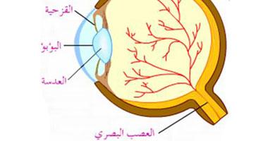 طريقة مبتكرة جديدة لحماية العين أضرار الجلوكوما لحماية العين أضرار الجلوكوما