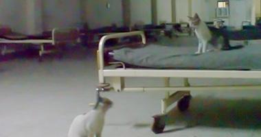 الاهمال يسيطر على مستشفى سوهاج العام