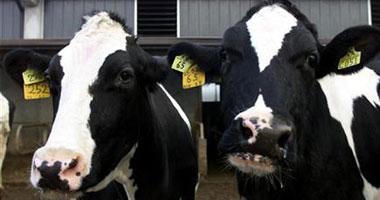 الحيوانات المصابة لا تستجيب للدواء