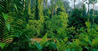 الأشجار الإستوائية بأريتريا تنقذهم من الفقر Tree520082519487