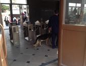 الكلاب البوليسية تمشط مترو حلوان تزامنا مع خروج الطلاب من الجامعة